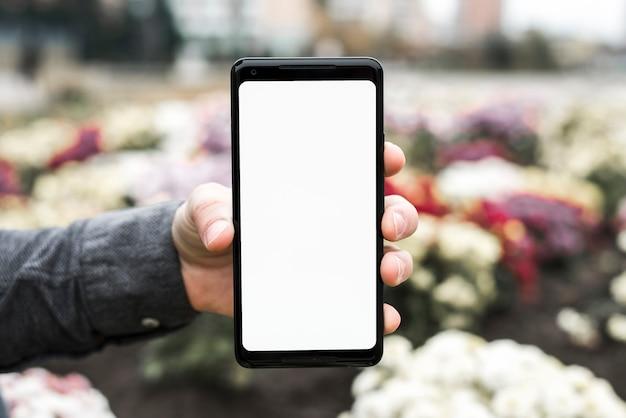 Close-up van de hand van een persoon die nieuwe slimme telefoon met witte het schermvertoning in de tuin toont Gratis Foto