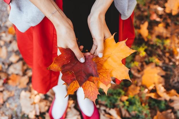 Close-up van de handen die van het meisje de bladeren van de de herfstesdoornboom houden Gratis Foto