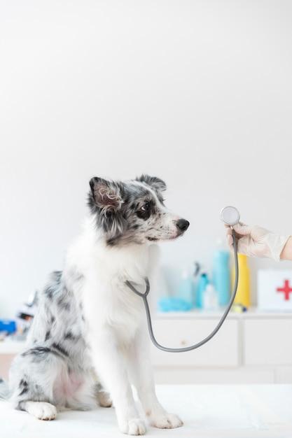 Close-up van de hond met een stethoscoop op tafel Gratis Foto