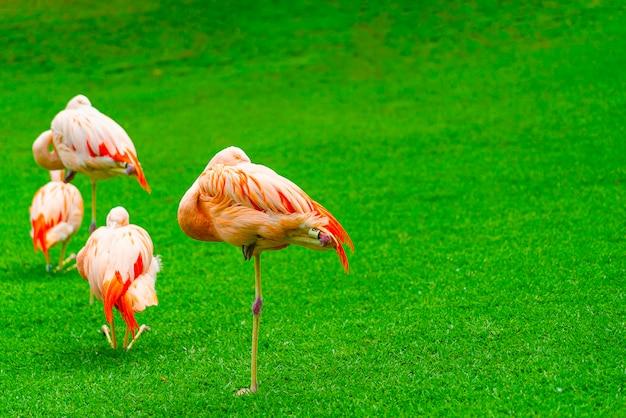 Close-up van de mooie slaap van de flamingogroep op het gras in het park Gratis Foto