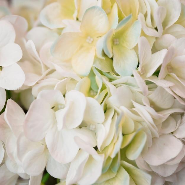 Close-up van de witte bloem van hydrangea hortensiamacrophylla Gratis Foto