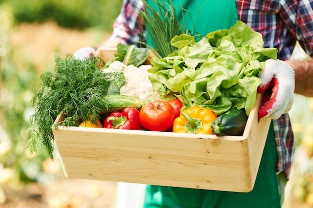 Close up van doos met groenten in handen van volwassen man Gratis Foto