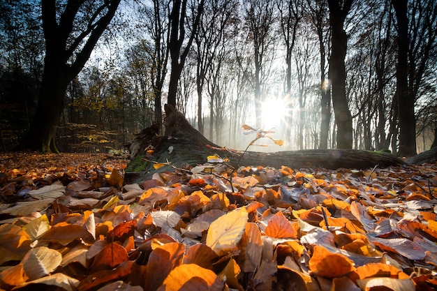 Close-up van droge bladeren die de grond bedekken, omringd door bomen in een bos in de herfst Gratis Foto