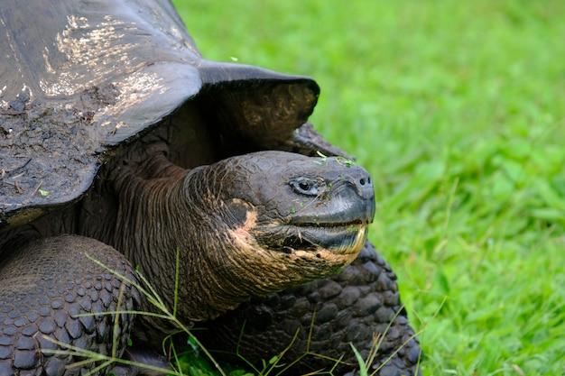 Close-up van een brekende schildpad op een grasrijk gebied met vage achtergrond Gratis Foto