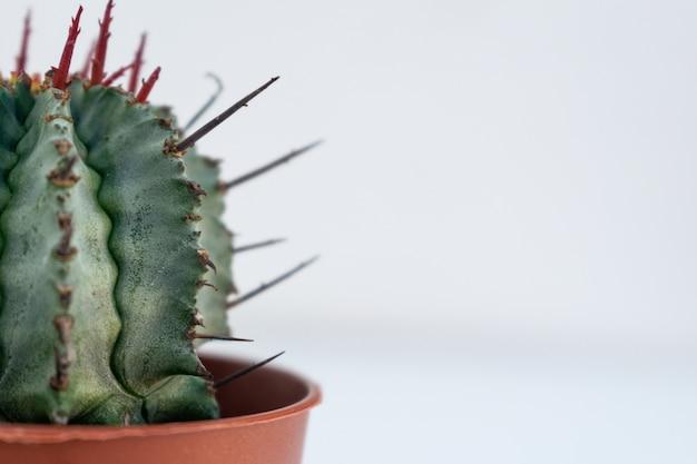Close-up van een cactus in een bruine bloembak gevangen op een witte achtergrond Gratis Foto
