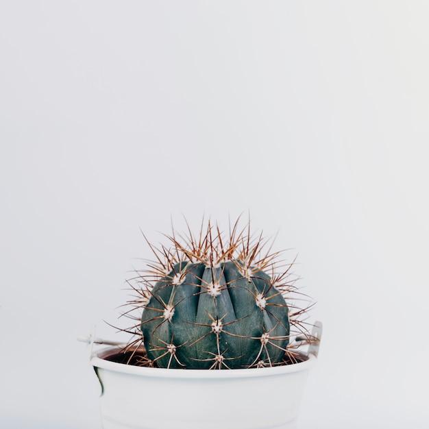 Close-up van een cactusinstallatie op witte achtergrond Gratis Foto
