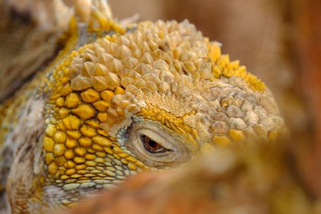 Close-up van een geel leguanenhoofd Gratis Foto