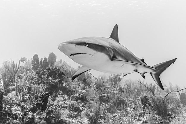 Close-up van een gevaarlijke haai die diep onder water zwemt, geschoten in grijstinten Gratis Foto