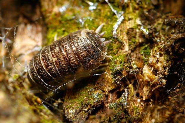 Close-up van een insect op de bosbodem Gratis Foto