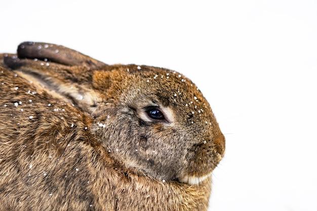 Close-up van een konijntje op witte sneeuw. kopieer de ruimte Premium Foto