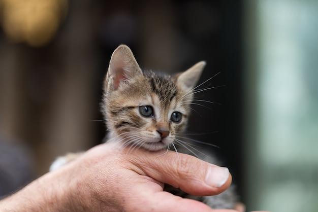 Close-up van een persoon die een schattig klein katje houdt Gratis Foto