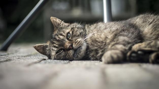 Close-up van een schattige binnenlandse kat liggend op de houten veranda met een onscherpe achtergrond Gratis Foto
