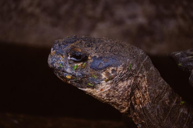Close-up van een schildpadhoofd met vage achtergrond Gratis Foto