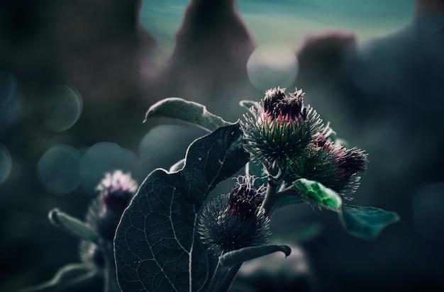Close-up van een silybum-bloem met vaag natuurlijk Gratis Foto
