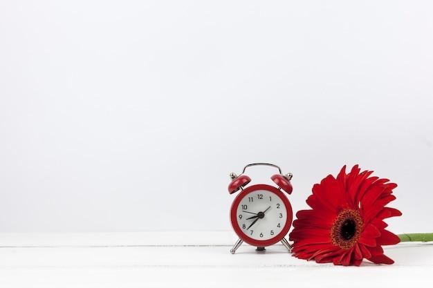 Close-up van een wekker en een rode gerberabloem Gratis Foto