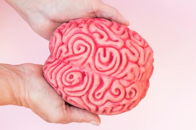 Close-up van hand die menselijk hersenmodel toont tegen roze achtergrond Gratis Foto