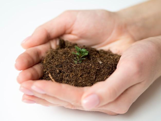 Close-up van handen met vuil en plant Gratis Foto
