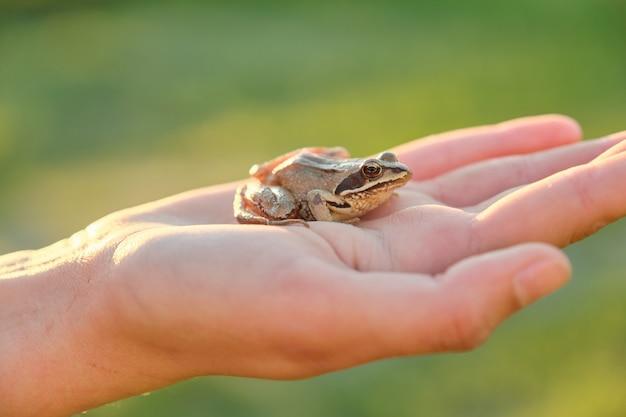 Close-up van kleine groene kikker zittend op de hand van het meisje, groen natuur gras Premium Foto