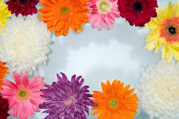 Close-up van kleurrijke bloemen die op water drijven Gratis Foto