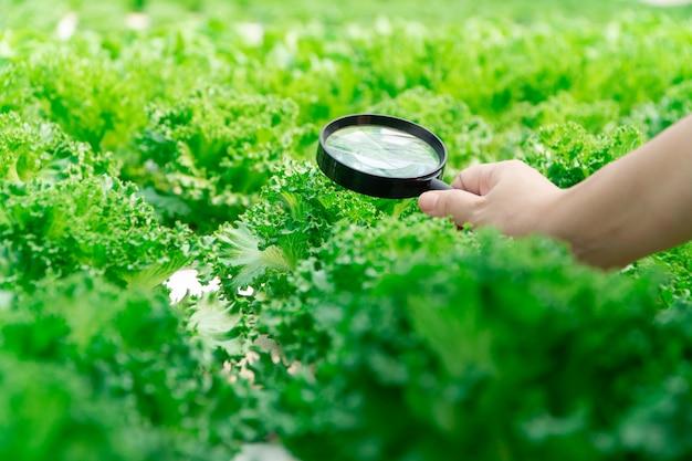 Close-up van landbouwershanden die vergrootglas houden en de groenten in hydrocultuurlandbouwbedrijf bekijken. Premium Foto