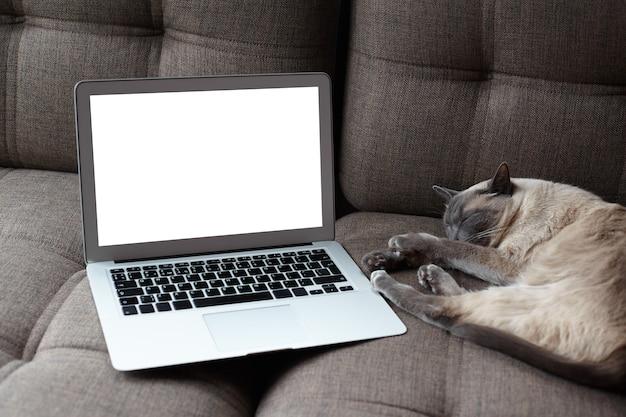 Close up van lege witte laptop scherm en slapende kat in modern gezellig interieur thuis. rust, gezelligheid, dierenverzorging en levensstijlconcept. Gratis Foto