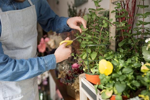 Close-up van mannelijke bloemist die de bladeren van installatie met schaar snijden Gratis Foto