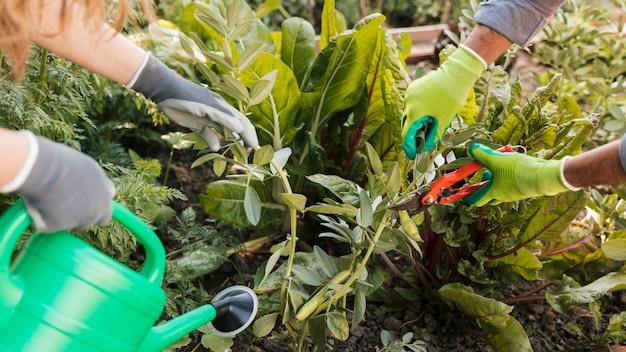 Close-up van mannelijke en vrouwelijke tuinman die en de installatie in de tuin in orde maken water geven Gratis Foto
