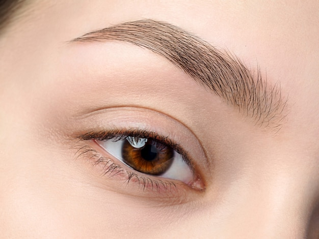 Close-up van mooi bruin vrouwelijk oog. perfecte trendy wenkbrauw. goed zicht, contactlenzen, wenkbrauwbalk of mode-concept voor wenkbrauwmake-up Premium Foto