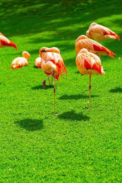 Close-up van mooie flamingogroep op het gras in het park Gratis Foto
