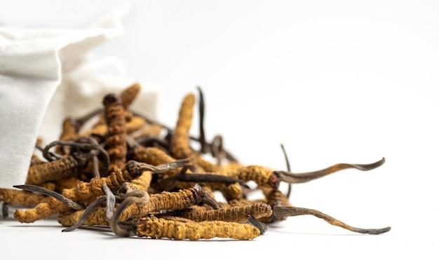 Close-up van ophiocordyceps-sinensis of paddestoel cordyceps in witte doekzak Premium Foto