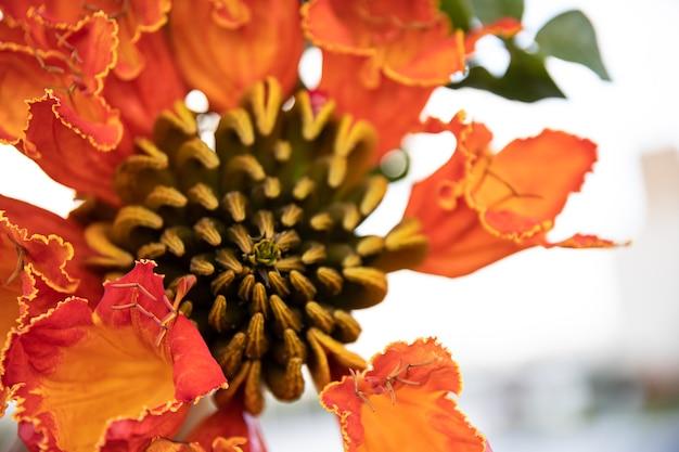 Close-up van rode exotische bloemen. planten en bloemen van egypte. Gratis Foto