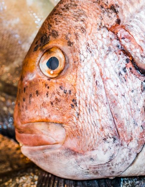 Close-up van rode verse vis Gratis Foto
