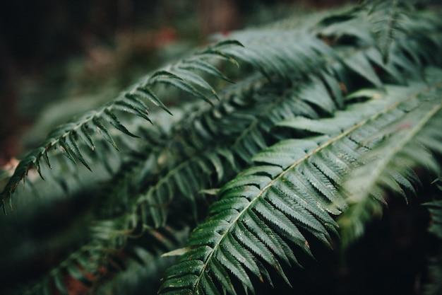 Close-up van varenbladeren in een tuin onder het zonlicht met een onscherpe achtergrond Gratis Foto