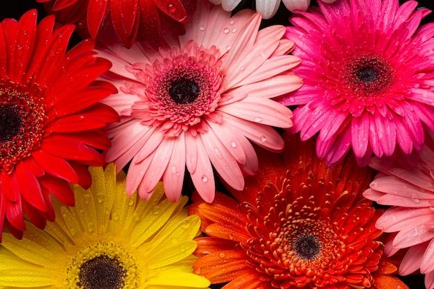 Close-up van veelkleurige gerberabloemen Gratis Foto
