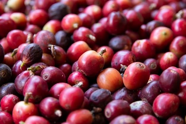 Close-up van verse koffiebonen. Premium Foto
