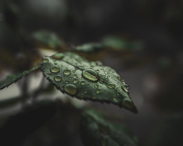 Close-up van waterdruppels op de bladeren van de plant Gratis Foto
