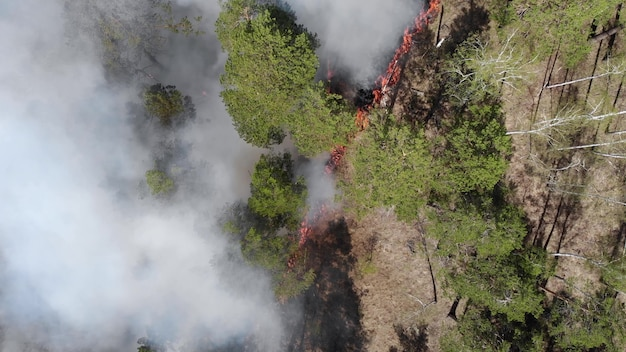 Close-up van wildvuur, vlammen van bosbrand verspreiden. natuurrampen, klimaatverandering, wereldwijde ontworming. vuur, wildvuur, brandend grasveld in de rook en vlammen. aarde concept Premium Foto