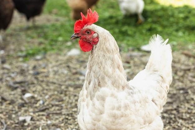 Close-up vrije witte kip bij landbouwbedrijf Gratis Foto