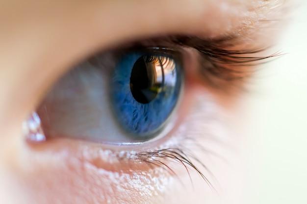 Close-upbeeld van blauw menselijk oog met wimpers Premium Foto