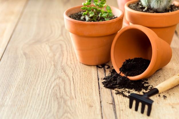 Close-upbloempot met grond en planten Gratis Foto