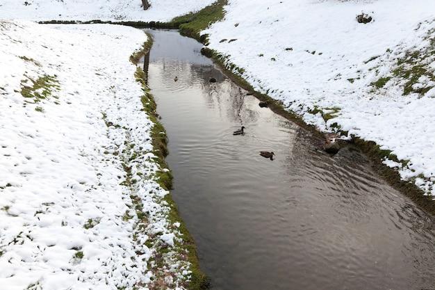 Close-upfoto van een smalle rivier in de winter. aan de oever ligt witte sneeuw na een sneeuwval. op het water drijven eenden Premium Foto