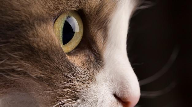 Close-upfoto van het hoofd van een grijze kat met groene ogen Premium Foto
