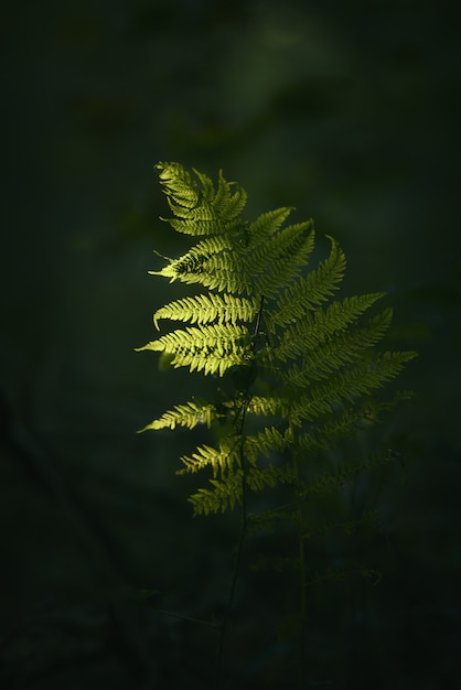 Close-upschot van een groene installatietak met vaag dark Gratis Foto