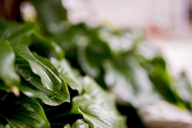 Close-upschot van groene installatiebladeren met een vage achtergrond Gratis Foto