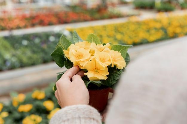 Close-upvrouw die een bloem in pot houden Gratis Foto