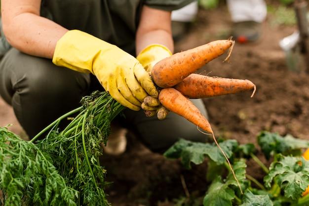 Close-upvrouw het oogsten wortelen Gratis Foto