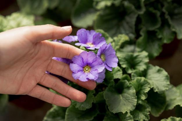 Close-upvrouw wat betreft purpere bloem Gratis Foto