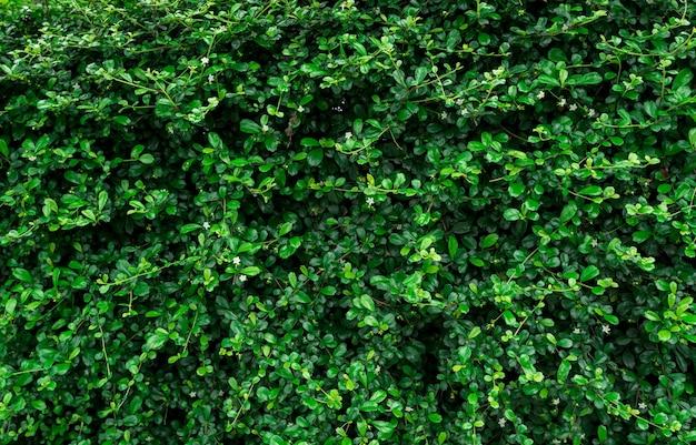 Closeup groenblijvende haagplanten. Premium Foto