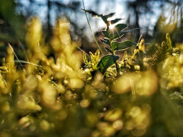 Closeup selectieve aandacht weergave van een plantje op een vroege zonsopgang hebben Gratis Foto