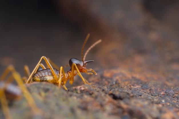 Closeup werknemer termiet op de grond Premium Foto